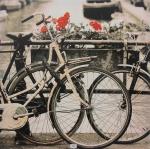 """S/ ASSINATURA - Esc. Francesa - Séc. XX - """"Rosas"""", reprodução s/ tela, med. 70 x 70cm."""